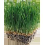 посев газонов, укладка газонных рулонов