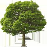 посадки деревьев и кустарников